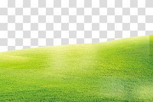Landscape Of Field Green Grass Background Transparent Background Png Clipart Green Grass Background Grass Background Transparent Background