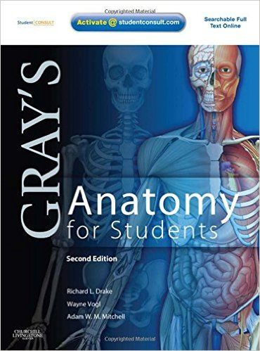 Gray's anatomy the anatomical basis of clinical practice, 40th ed.