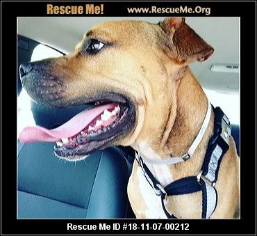 Florida Black Mouth Cur Rescue Adoptions Rescue Me Black Mouth Cur Black Mouth Cur Dog Adoption