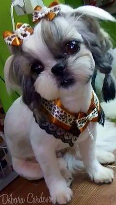 101 Groomers En Accion Shihtzu Shihtzupuppy Cute Baby