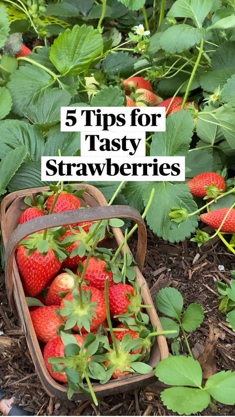 5 Tips for Tasty Strawberries