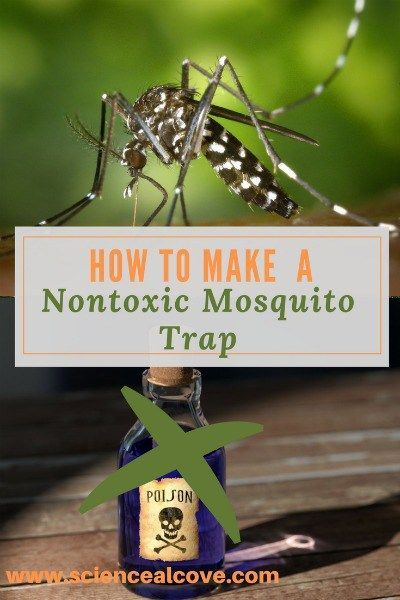 How To Make A Non Toxic Mosquito Trap To Control The Insects Making You Itch It Is Not A Repellant But Will Attract T Mosquito Trap Mosquito Mosquito Trap Diy