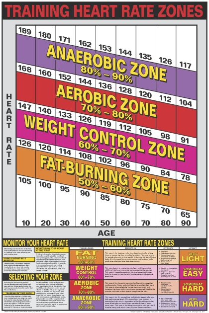 Heart Rate Training Zones Poster  Laminated  Heart Rate Heart
