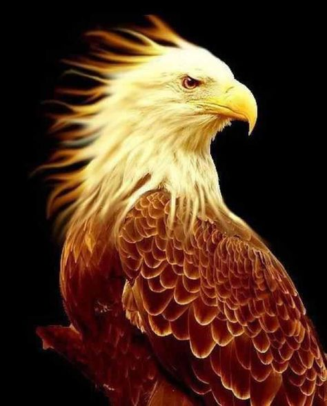 Eagle of fire staying  in God's Glory