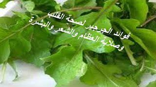 البيت العربي فوائد الجرجير لصحة القلب وصلابة العظام والشعر والبشرة Herbs Vegetables Lettuce