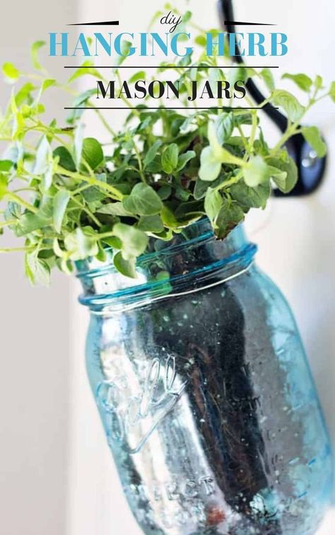 Hanging Fresh Herbs in Vintage Blue and Green Mason Jars - perfect way to have an indoor herb garden in your kitchen! #masonjars #vintagemasonjars #bluemasonjars #greenmasonjars #vintage #herbs #freshherbs #diyproject #diyherbs #hanginggarden