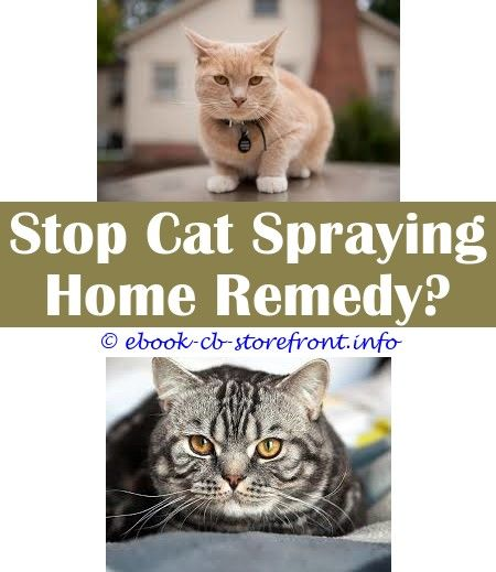 15 Gorgeous Best Product To Stop Cat Spraying Cat Spray Male Cat Spraying Cats