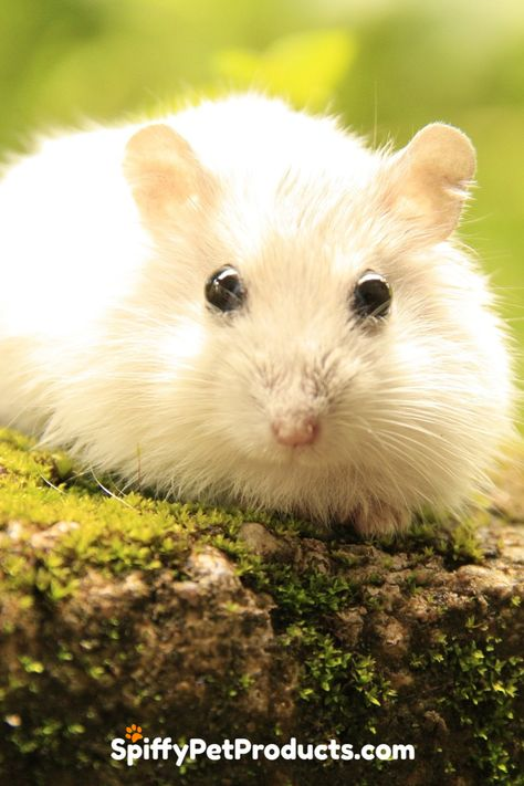 What Do Hamsters Need Here S How To Make Your Own Hamster Starter