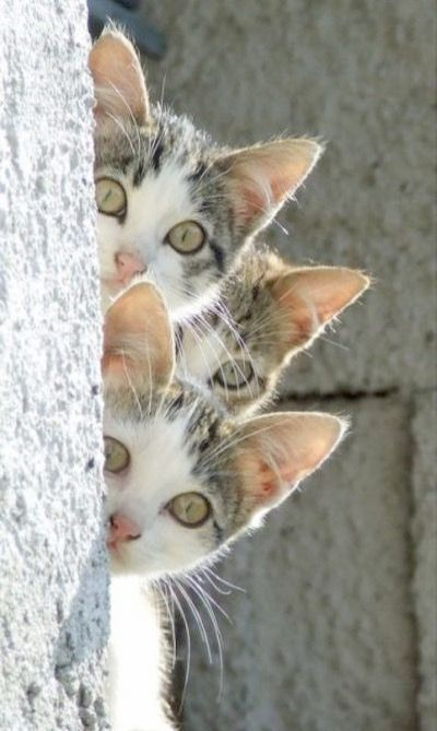 Cats And Kittens Bowland Maths Free Cats And Kittens Near Me