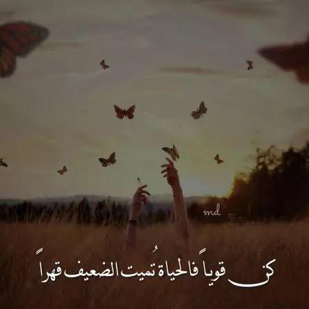 خلفيات واتساب خلفيات واتساب جميله خلفيات واتساب للبنات خلفيات حلوة Beautiful Words Arabic Quotes Quotes