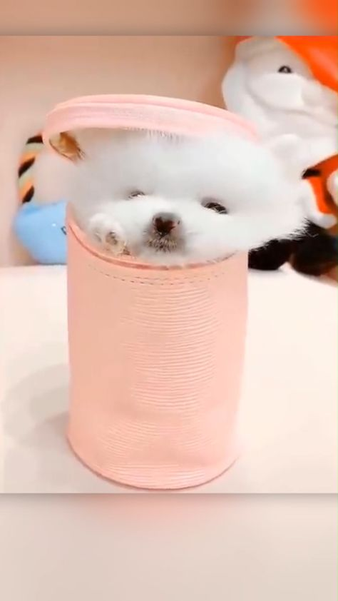 Relaxed Puppy Chilling Inside A Purse