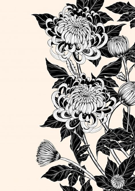 Illustration of Chrysanthemum flower by hand drawing. Floral vintage highly detailed in line art style. vector art, clipart and stock vectors. Chrysanthemum Drawing, Japanese Chrysanthemum, Chrysanthemum Flower, Japanese Flowers, Japanese Art, Art Floral, Motif Floral, Floral Drawing, Vector Art
