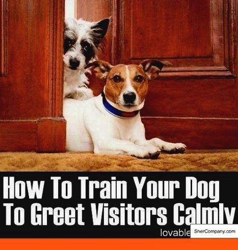 3 Simple Dog Training Tips That Will Change Your Dogs In No Time