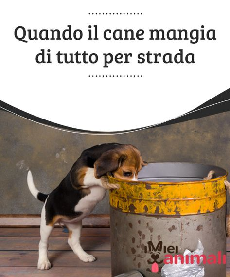 Quando Il Cane Mangia Di Tutto Per Strada Salute Del Cane Cani