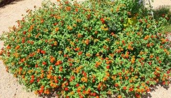 Top 9 Fast Growing Ground Cover For Slopes X Boom Garden In 2020 Ground Cover Ground Cover Plants Low Growing Ground Cover