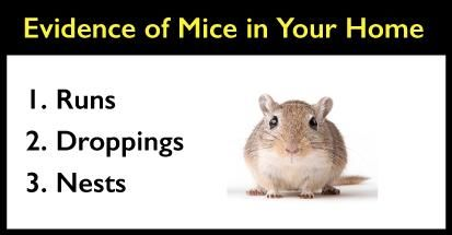 How To Get Mice Out Of Your Walls Air Ducts And Crawl Spaces Air Ducts Crawlspace Getting Rid Of Mice