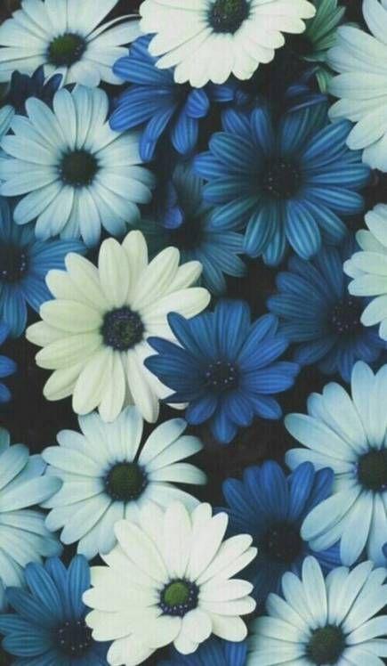 19 Trendy Flowers Wallpaper Iphone Tumblr Phone Backgrounds Blue Flower Wallpaper Floral Wallpaper Phone Floral Wallpaper
