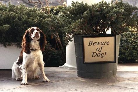 The 42 Best Photos Ever Taken Of White House Pets Dogs Pets