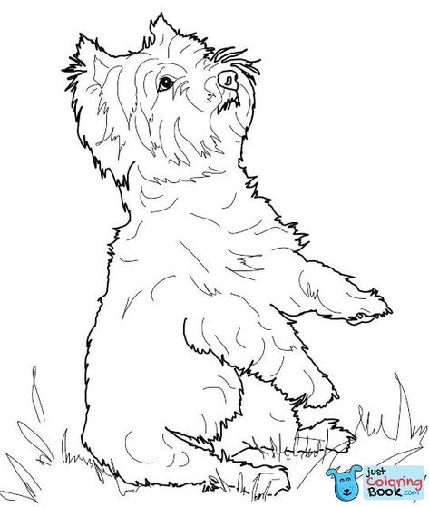 Yorkshire Terrier Or Yorkie Coloring Page Free Printable For Silky Terrier Coloring Pages Free Downlo Puppy Coloring Pages Dog Coloring Book Dog Coloring Page