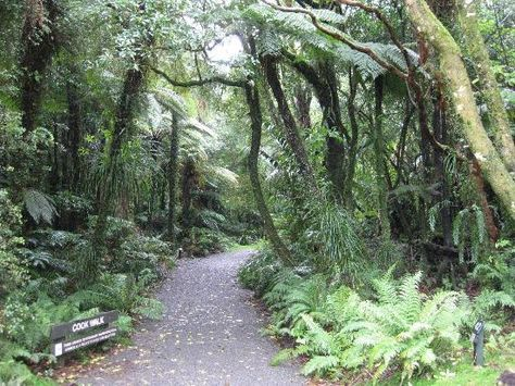 Pukeiti Rhododendron Park, New Plymouth, NZ