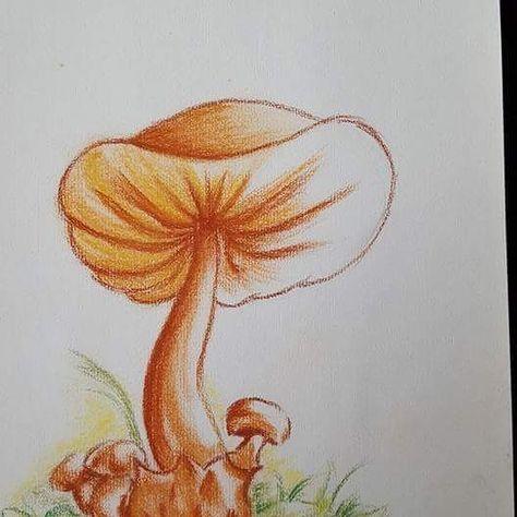 Cueillette Dessin Champignon Pastel Nature Automne
