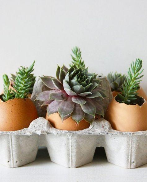 Die 13 besten Bilder zu Eggshell plants auf Pinterest Pflanzen