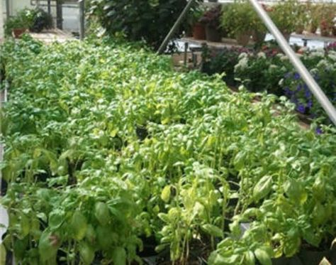 Garden Centers And Nurseries Around Me With Images Garden