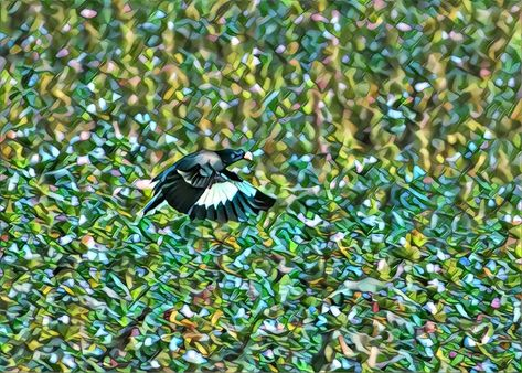 😃 °✓ Cartoon Myna flying beauty ☺️ #birds #bird #nature #birdsofinstagram #wildlife #naturephotography #birdphotography #photography #birdwatching #parrots #wildlifephotography #best #ig  #birding  #aves #perfection  #naturelovers #love #canon #birdlovers #captures #nikon #art #parrotsofinstagram #cute #myna #ewildlife_santhosh_sunil #natgeoyourshot #rathikaramasamy