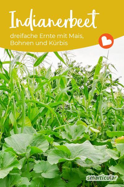 Milpa Beet Anlegen Die Mischkultur Mit Mais Bohnen Und Kurbis In 2020 Mischkultur Kurbis Pflanzen Mais Pflanzen