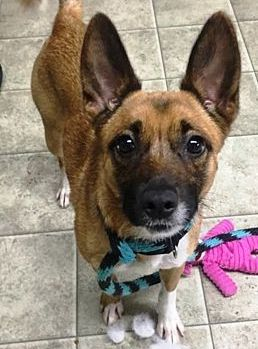 My Name Is Tinker I M A Puppy Terrier Mix Girl 18 Months Old
