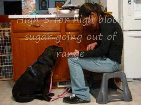 Diabetes Alert Service Dog Training Diabetes Service Dog