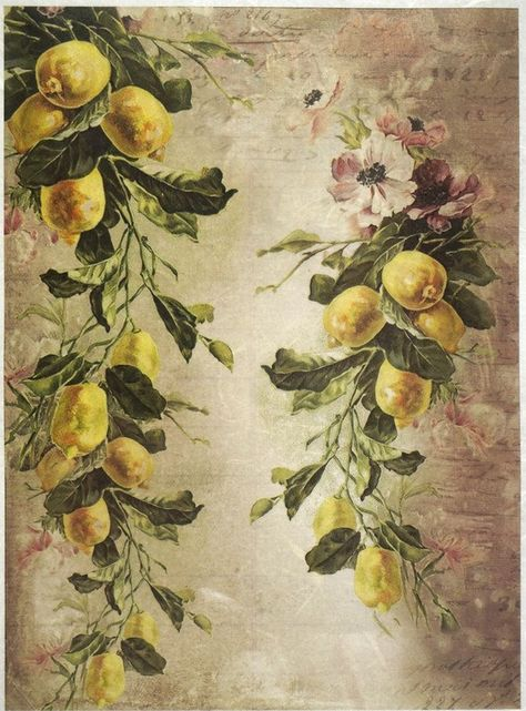 Scrapbooking Rice Paper for Decoupage Bunch of Grapes Sheet Craft Vintage