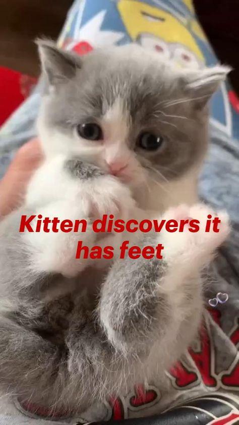 Kitten discovers it has feet