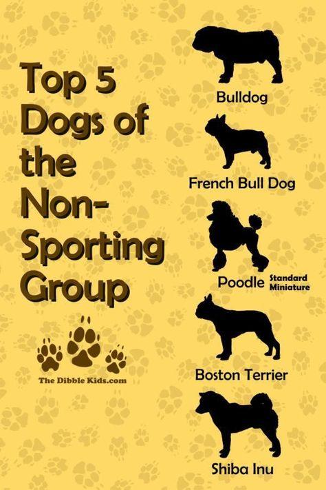 Top 5 Non Sporting Dog Breeds Dog Breeds Dog Psychology Poodle