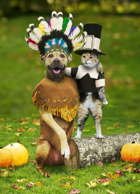 a tasty turkey day feast for your dog easy thanksgiving dog treat recipes and homemade thanksgiving food for dogs dog thanksgiving funny cat pictures cat pics pinterest