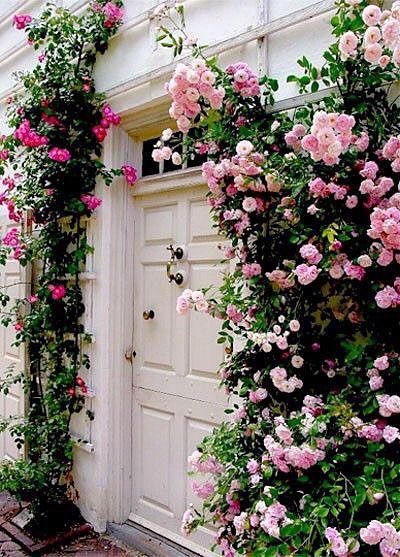 ピンク レトロ 建物 外国 緑 おしゃれ Beautiful Flowers Flowers Climbing Roses