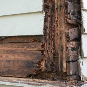 Homeowners Beware This Hidden Problem Could Cause Your House To Crumble Wood Termites Termite Damage Wood Repair