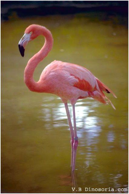 14 Réaliste Le Flamant Rose Gallery Flamingo Flamingo Pictures Flamingo Photo