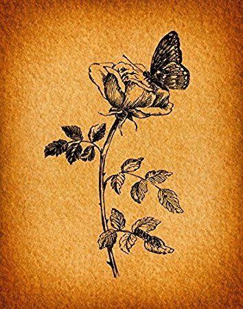 Vintage Rose Flower with Butterfly Print Antique Illustration ...