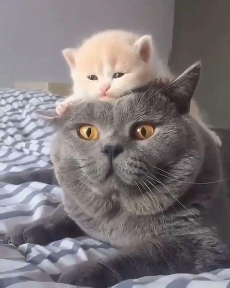 #cats #catsoftheworld #catofinstagram #catoftheday #catstagram #kitty