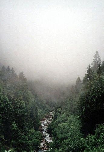 Een mistige dag in het bos.