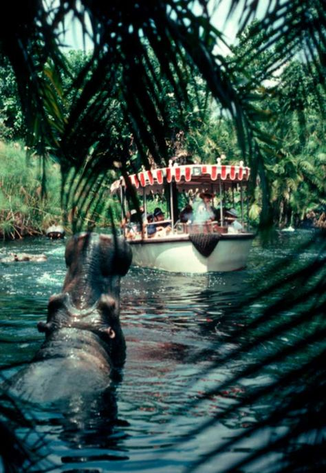Jungle Cruise is Really Punny jungle_cruise_hipposjungle_cruise_hippos Disney Rides, Disney Parks, Disney Pixar, Walt Disney, Disney Trivia, Disneyland Rides, Orlando Disney, Disney Dream, Disney Love
