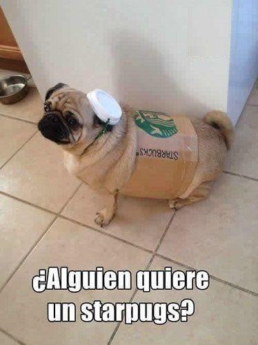 Starpugs Https Www Yoalucino Com Animales Starpugs Disfraces Para Perros Memes De Perros Chistosos Perros Disfrazados