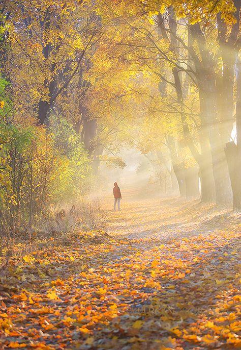 On autumn path - autumn, Poland  www.facebook.com/MarcinSobasPhotography