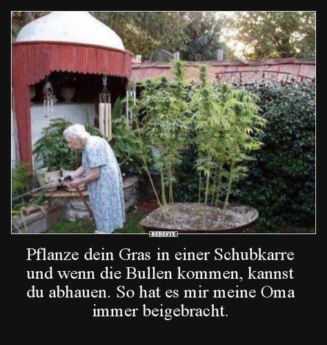 Pflanze dein Gras in einer Schubkarre und wenn die Bullen..