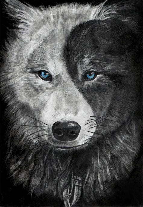 loup, représentant le bien et le mal, réalisé au crayon graphite, pierre noire, pastel et fusain