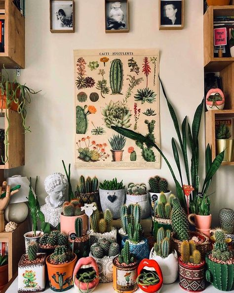 Care of succulents indoors Succulents network - Dekoration Ideen 2019 Cacti And Succulents, Potted Plants, Cactus Plants, Indoor Plants, Indoor Cactus Garden, Cactus Pot, Colorful Plants, Indoor Gardening, House Plants Decor