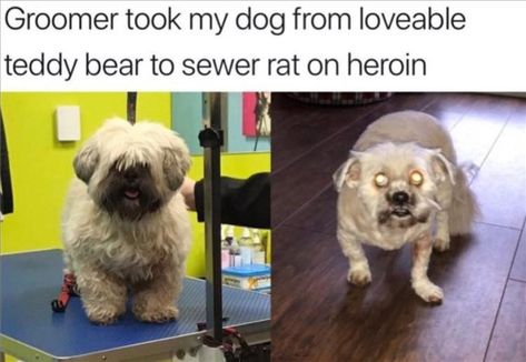 24 Funny Animal Memes Of The Day  #Animal #Funny #Memes
