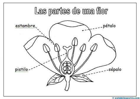 Partes De Una Flor Web Del Maestro Partes De La Flor Cuadernos Interactivos De Ciencias Ciencias De La Naturaleza