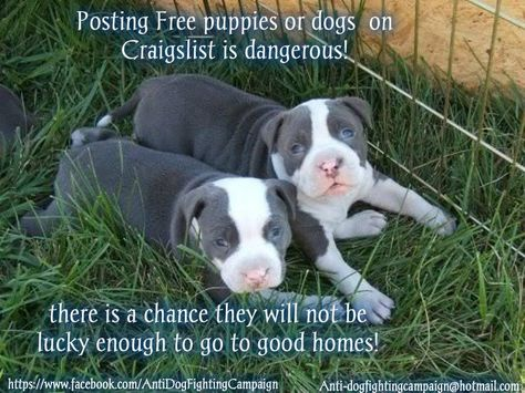 Posting Free Puppies Or Dogs On Craigslist Is Dangerous Pitbull